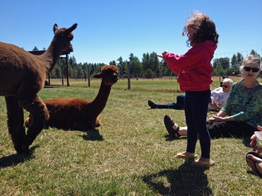 alpaca educational tour